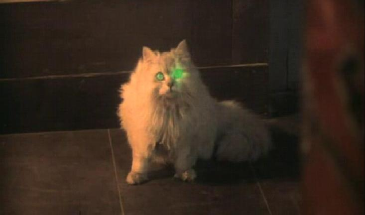The Importance Of Cats In Horror Cinema Den Of Geek