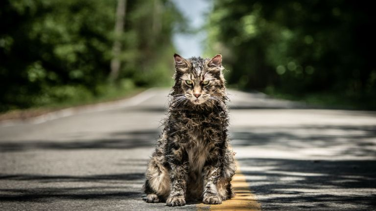 Pet Sematary Remake Cat