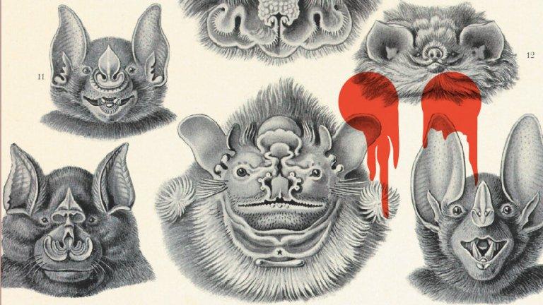Vampire Bats on the Carmilla Cover