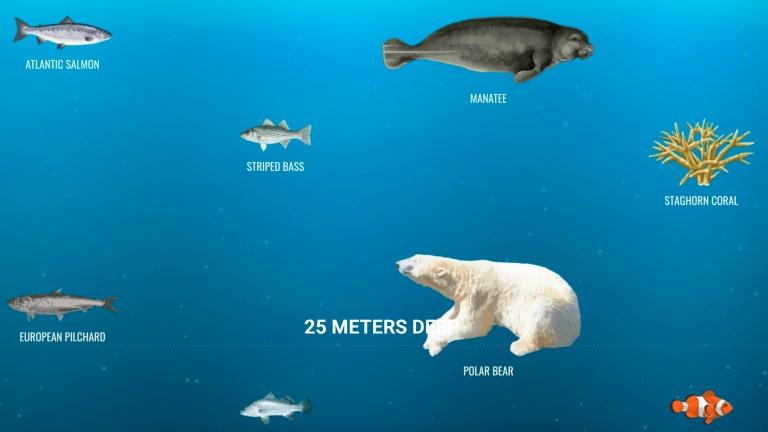 The ocean at 25 meters