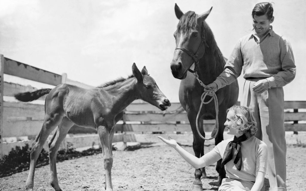 Clark Gable and Carole Lombard with horses in Encino ranch